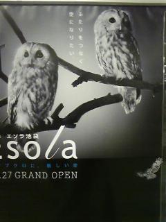 Esolaのフクロウのポスター