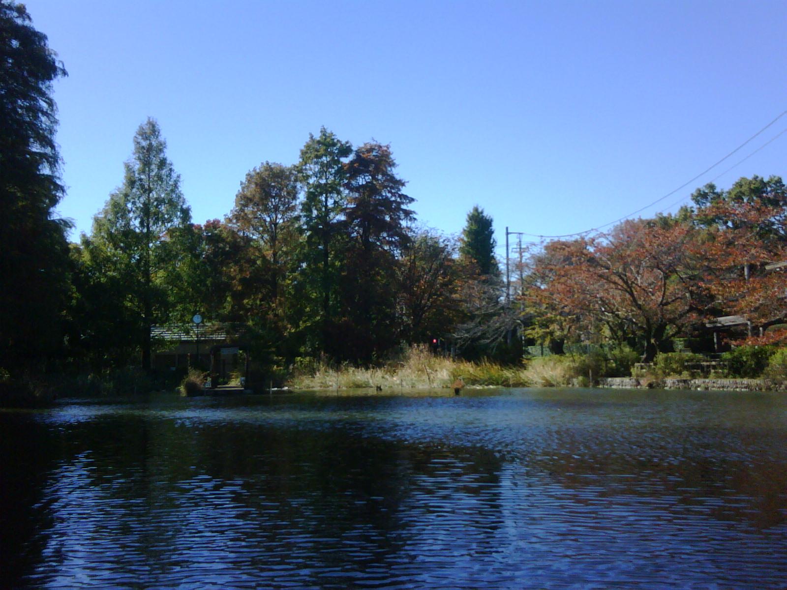 紅葉の石神井池